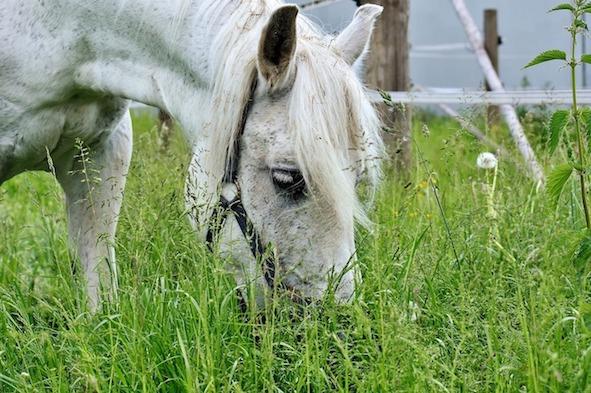 Zioła dla koni