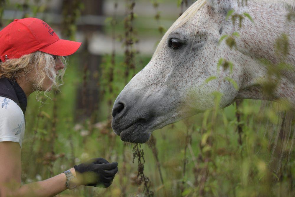masaż koni, fizjoterapia konia,