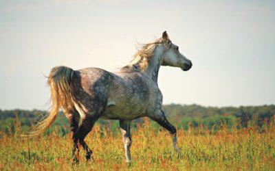 Jak dbać o konia w czasie upałów?