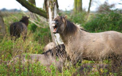 stres a funkcjonowanie konia