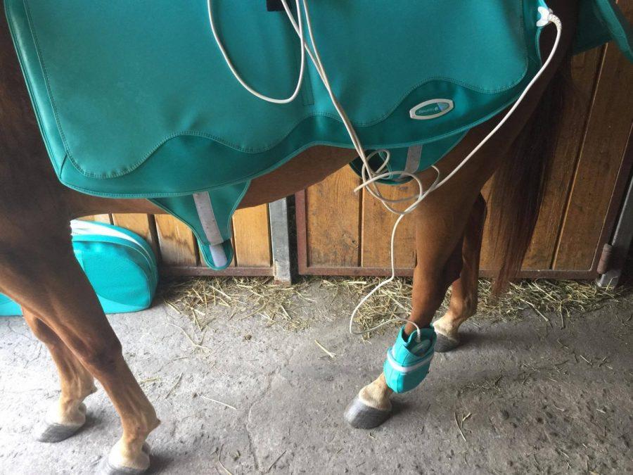 jak dbac o konskie zdrowie
