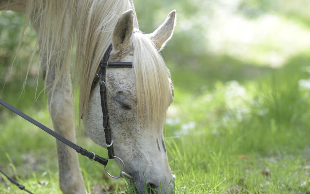 ogłowie dla konia jak dopasować