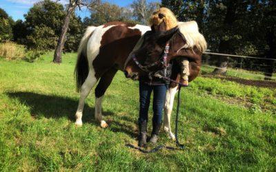Ćwiczenia na marchewkę dla konia