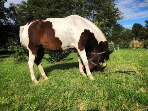 ćwiczenia dla konia