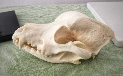 Osteopatia dla zwierząt – koń, pies, kot …. i żółw