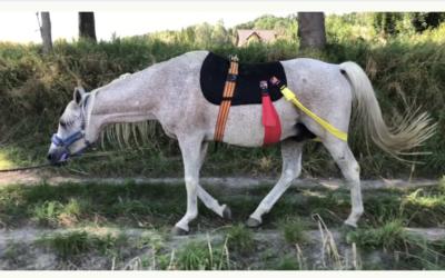 Postawa konia, anatomia i patenty jeździeckie
